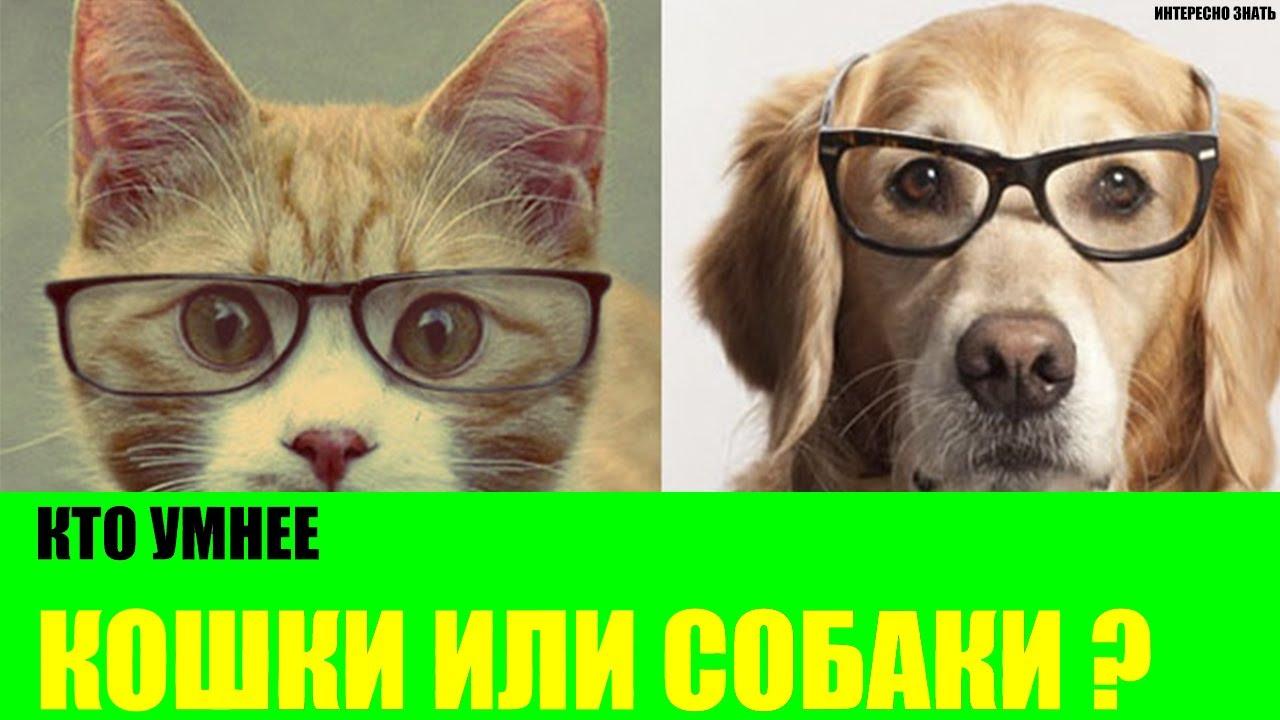 Коты умней или кошки