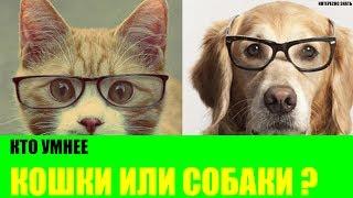 видео Кого любят кошки: психология домашнего питомца