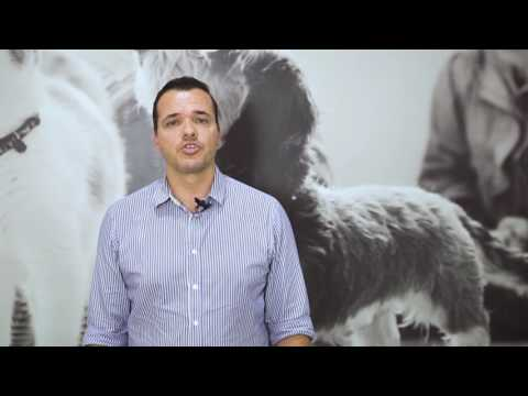 Mundo Animal: Tratamento Leishmaniose Visceral Canina