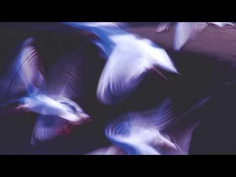 Клип Corde Oblique - Ali bianche