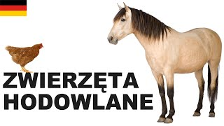 Polnisch für Anfänger - Zuchttiere 1 (Zwierzęta hodowlane)