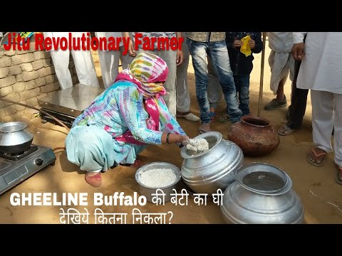 (PART 3)  GHEELINE- Daughter Buffalo- KAVITA - GHEE Recorded 1.870 KG on 25.3.2018 Morning.