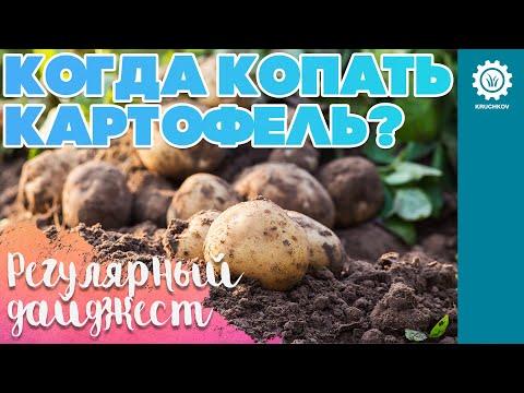Когда лучше копать картофель�� | Регулярный дайджест✔️