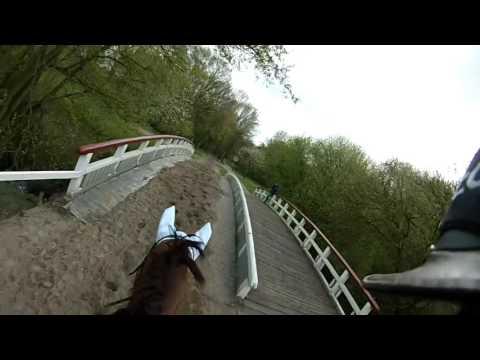 SGW Amsterdamse Bos 2017 B paarden (1ste plaats)