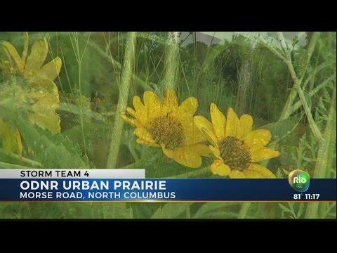 Urban prairie