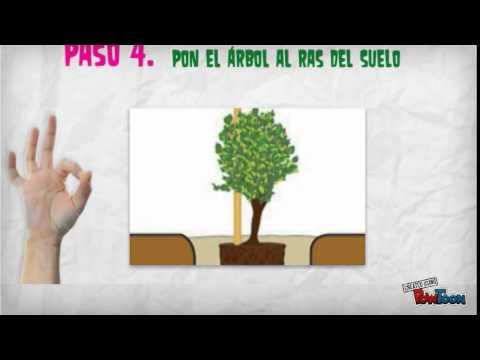 7 pasos para plantar un árbol