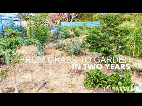 From Grass To Food Forest Garden In 2 Years