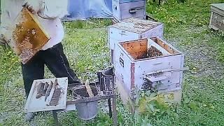 Что же делать пчеловоду весной в мае возле пчел?