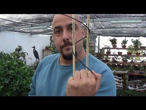 Cómo se hacen los bonsai comerciales?