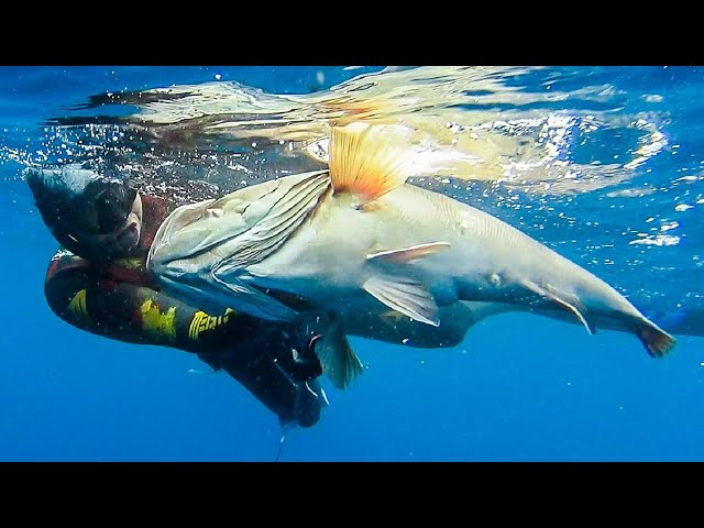🔝SHOTS ONLY💥Spearfishing MASTERPIECE Part 2 |Spearfishing Life 🇬🇷 ✅