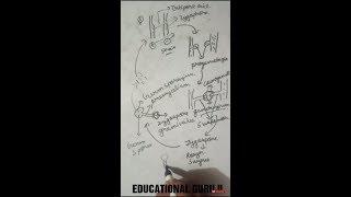 life cycle of rhizopus -phycomycete best explained in hindi