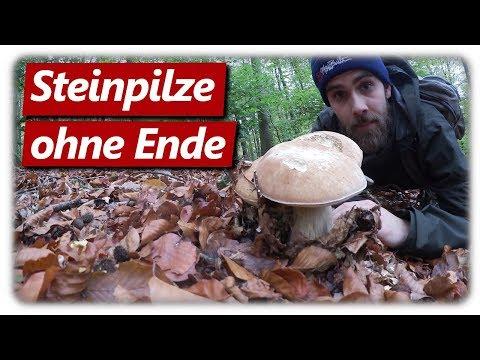 Steinpilze Sammeln | Steinpilz Wahnsinn 2019 Geht Weiter