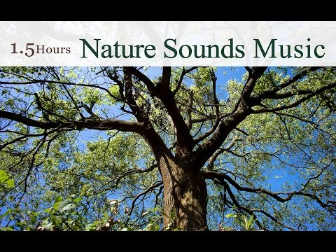 ★ 1.5 Hours ★ The Best Nature Sounds Music of Taiwan (By Wu Judy Chin-tai) / 吳金黛的大自然音樂精選