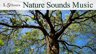 ★1.5 Hours★ 吳金黛的大自然音樂精選 / The Best Nature Sounds Music of Taiwan (By Wu Judy Chin-tai)