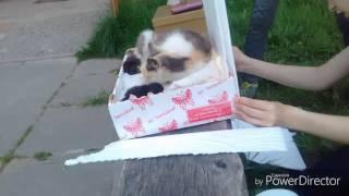Спосение котят!!! 3 чорных и 3 бела-серых!!! И 1-у, 3-х цветную кошку!!!