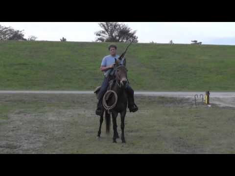 VERY NICE!  GAITED MOLLY MULE FOR SALE!!
