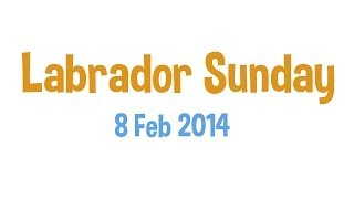 Labrador Sunday 2 | 8 Feb 2014