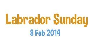 Labrador Sunday 2 | 8 Feb 2014
