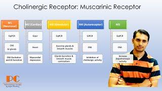 Cholinergic receptors (part 1): Muscarinic Receptors I Muscarinic Actions