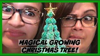 GROWING A MAGICAL CHRISTMAS TREE!