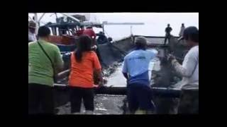 Panen ikan Bandeng di keramba jaring apung AquaTec