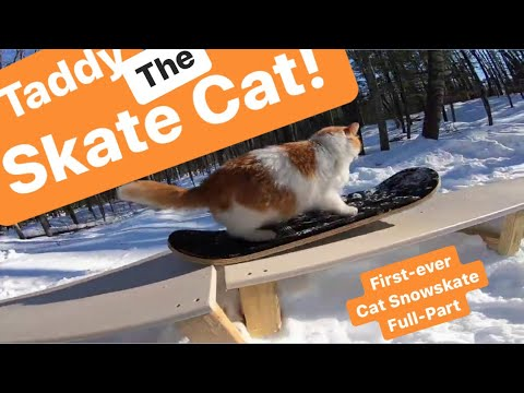 Taddy Skates 2020- Best Cat Snowskate Video Ever!
