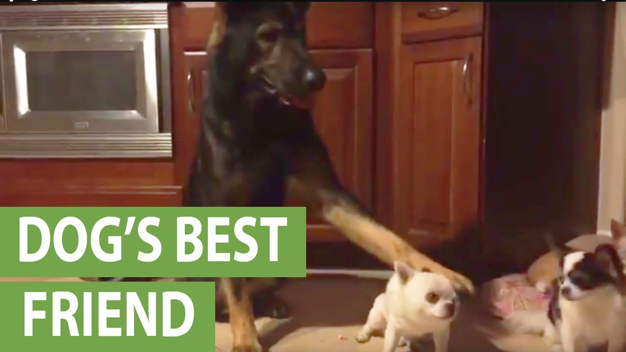 Whos Your Best Friend Dog Compilation