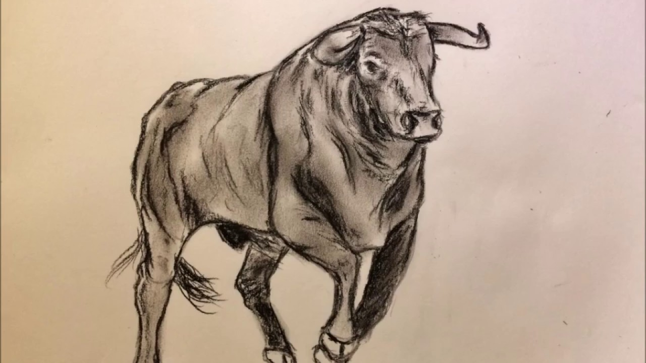speed drawing taureau 2017 - YouTube
