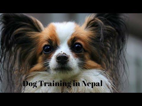 Dog Training in Nepal नेपालमा कुकुर तालिम