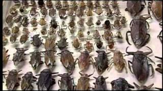 Nuestra UNAM: Insectos comestibles