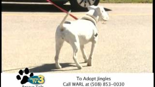 Rescue Tails - Jingles The Dog