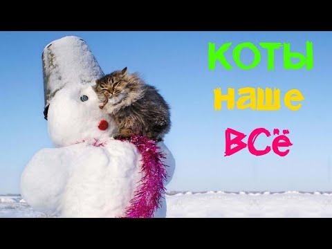 Смешные кошки коты приколы за 24 декабря