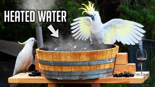 I Made A Hot Tub For Australian Birds!