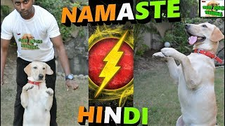 How To Teach Your Dog NAMASTE / SALUTE / SIT PRETTY