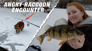 Run and Gun Ice Fishing for Jumbo Perch