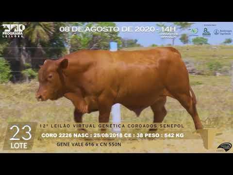 LOTE 23 CORO 2226
