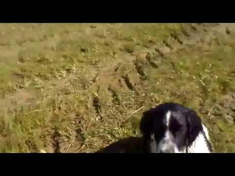 Video De Tomy Education  019