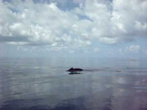 Whales in the Caribbean off Antigua and Barbuda