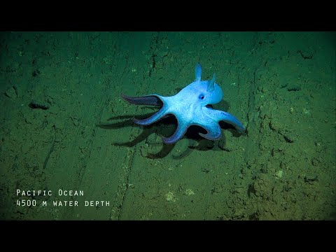 Impacts and risks of deep-sea mining - Fast Forward Science 2019