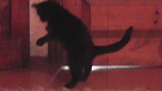 Черный кот – оберег для дома