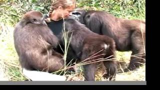 getting to love GORILLAS with the John Aspinall Foundation in Africa