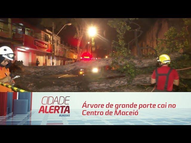 Árvore de grande porte cai no centro de Maceió