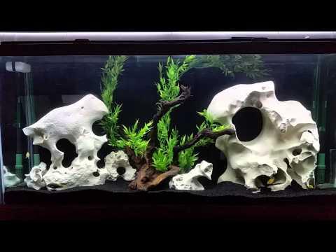 Lake Malawai African Mbuna Cichlids:  1994 55 Gallon Oceanic Aquarium