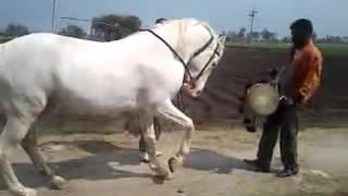 Download Video سکس با اسب رقاص MP3 3GP MP4