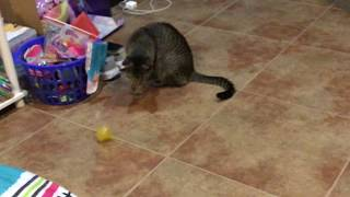 When you realize your cat stole your toys 2