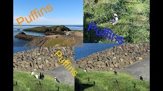 Best place to see Puffins (Iceland Day 12)