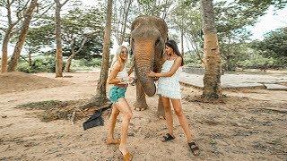 I FED ELEPHANTS