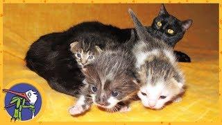 видео Как заботиться о котятах