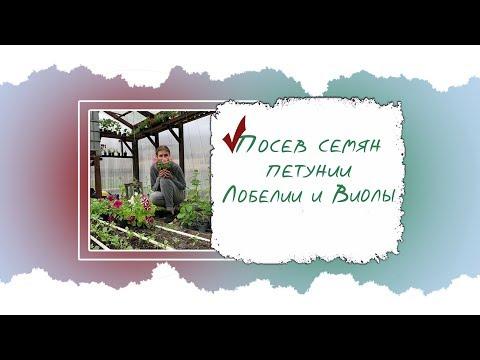 Посев семян Петунии Лобелии и Виолы.часть 1
