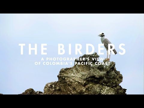 THE BIRDERS | A photographer's view of Colombia's Pacific Coast.